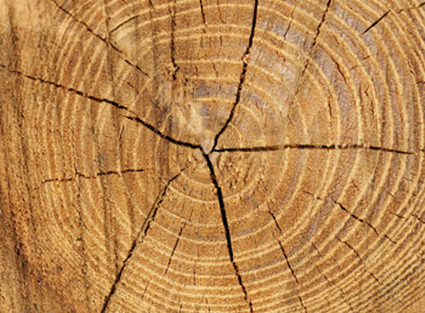Tree Trunk Rings